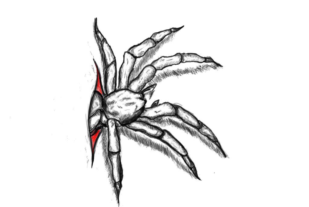 Spider Tattoo Vorlage By Lennysin22er On Deviantart