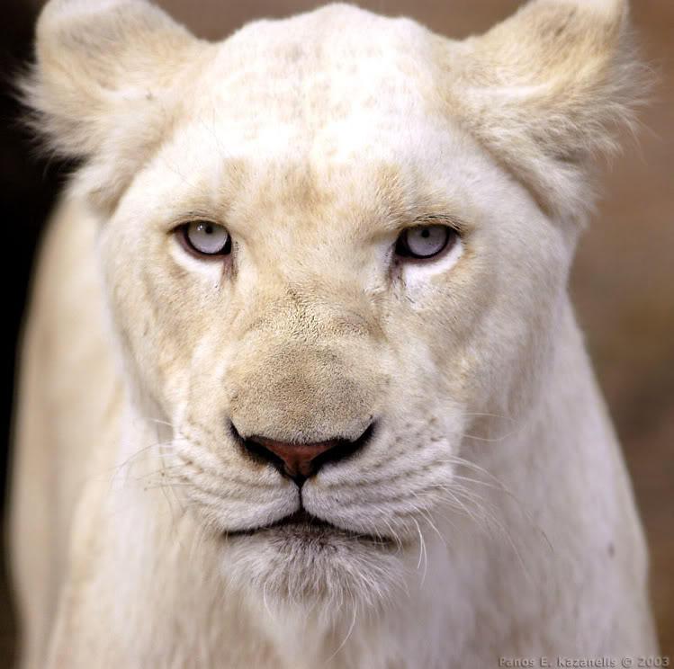 http://img11.deviantart.net/f87e/i/2010/145/3/7/albino_hunter_by_monono3421.jpg