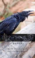 3R Stock - Raven