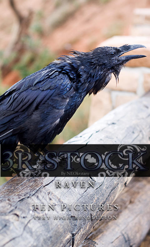 3R Stock - Raven by NEOkeitaro