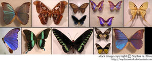 stock pack: Butterfly wings