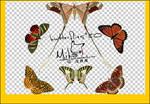 butterflies20