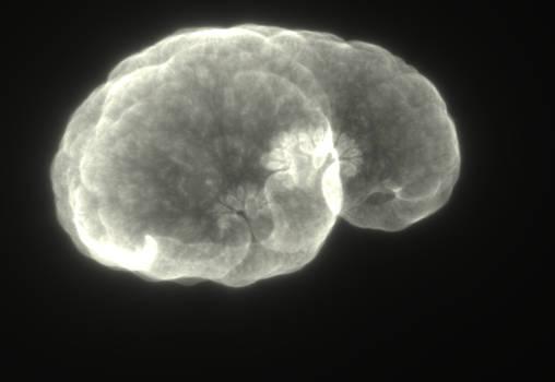 Medusa Ghost