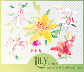 5 Lily pngs by Susana by susana454572