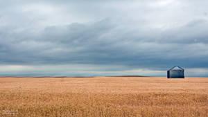 Open Field Montana