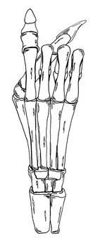 HandRight skeleton