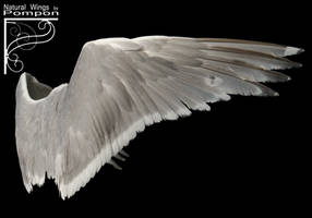 Natural Wings 01 by coolzero2a