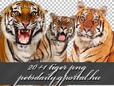 20+1 tiger png by KimSalvatore