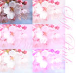 Soft Pink Photoshop Actions