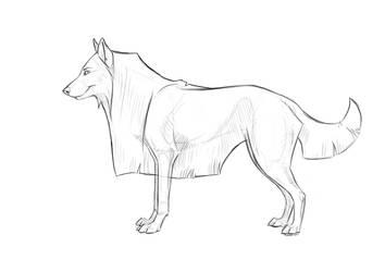 WOLF/DOG LINEART + PSD