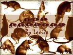 Rat Brushes