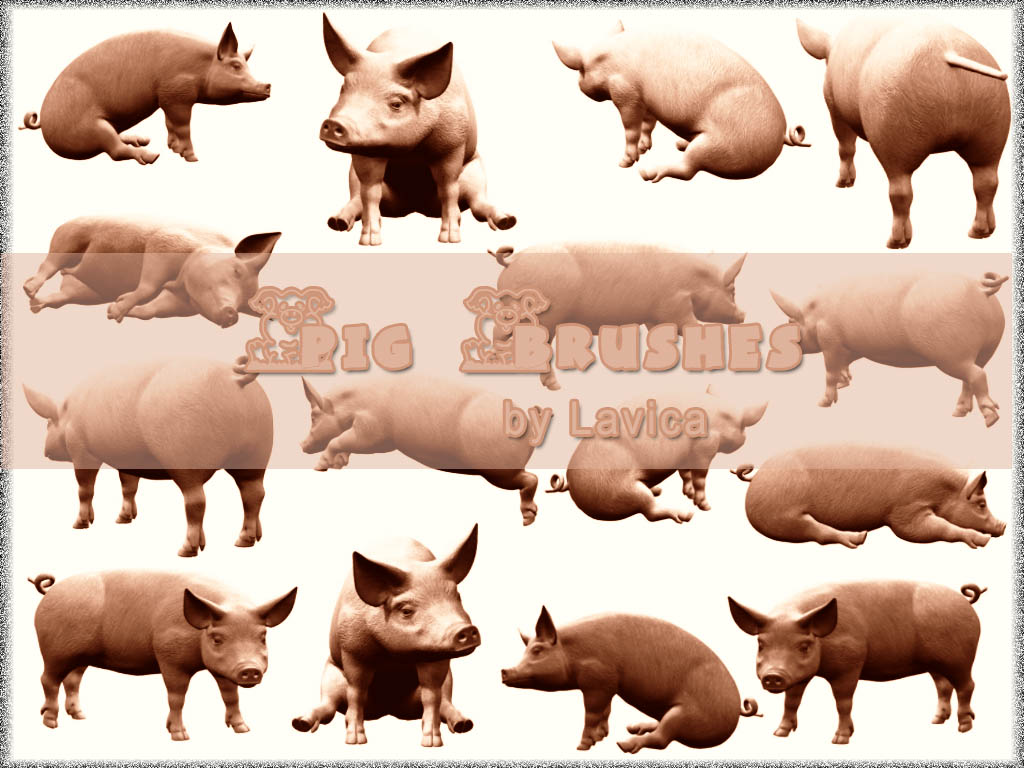 Pig Brushes