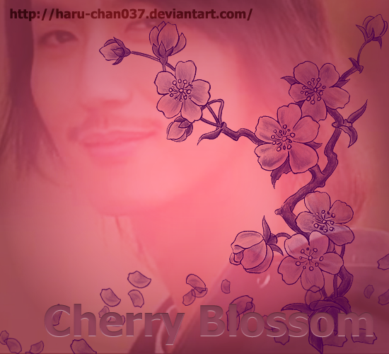 cherryblossoms by haru-chan037