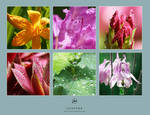 Flowers and Drops - Pack