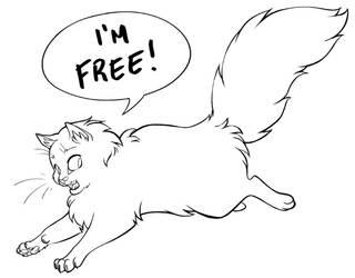 Running Fluffy Cat