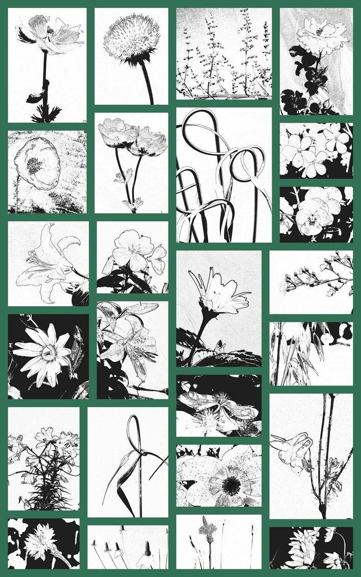 Garden Lineart:  Summer Plants by Foxytocin
