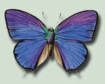 Butterfly 5 PSD