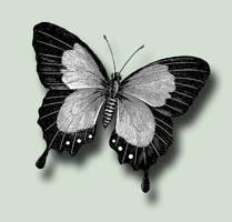Butterfly 6 PSD by ravenarcana