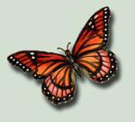 Butterfly 8 PSD