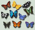 Butterflies .PSD Pack