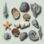 Seashells Pack psd