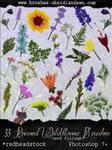 GIMP Pressed Wildflowers