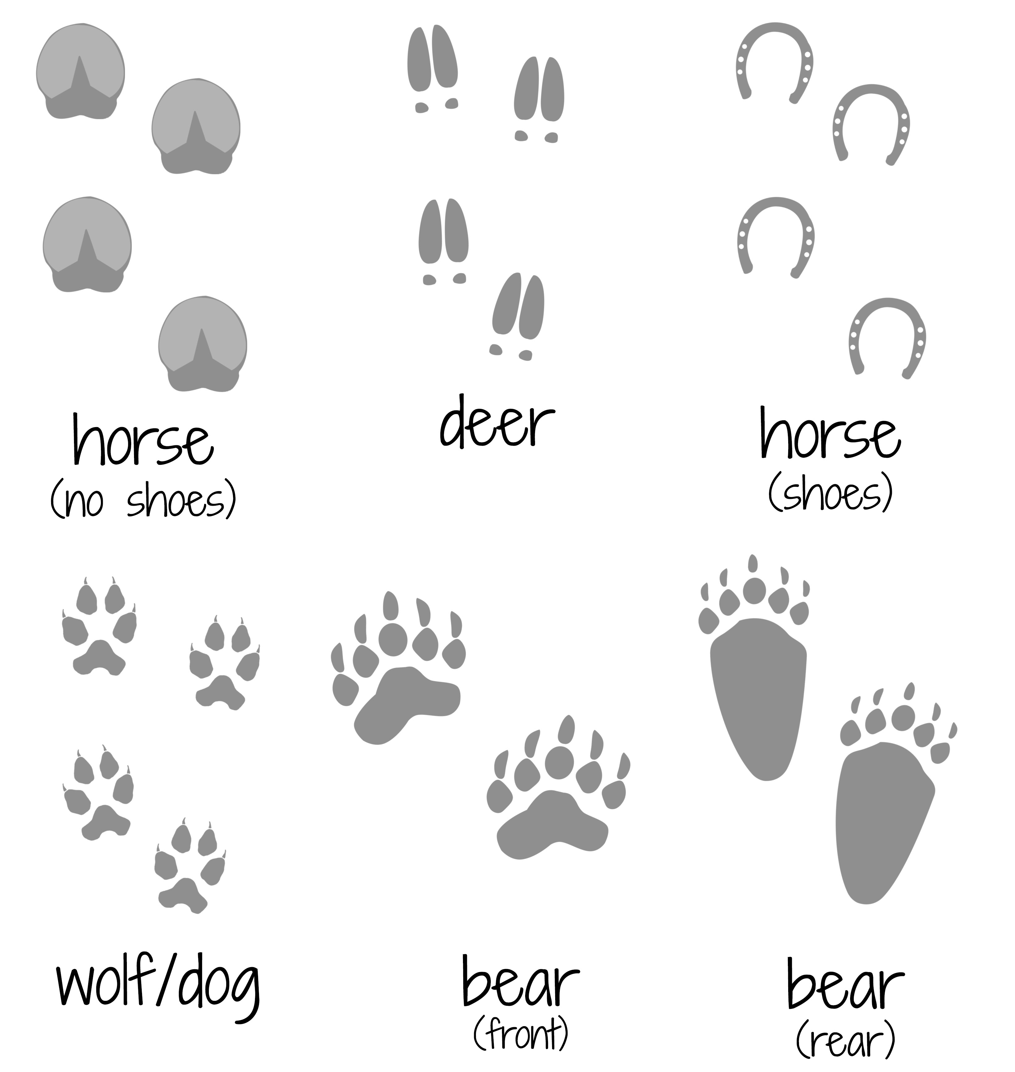Animal Footprint Shoes For Sale