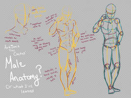 Male Anatomy by ArtyyTart