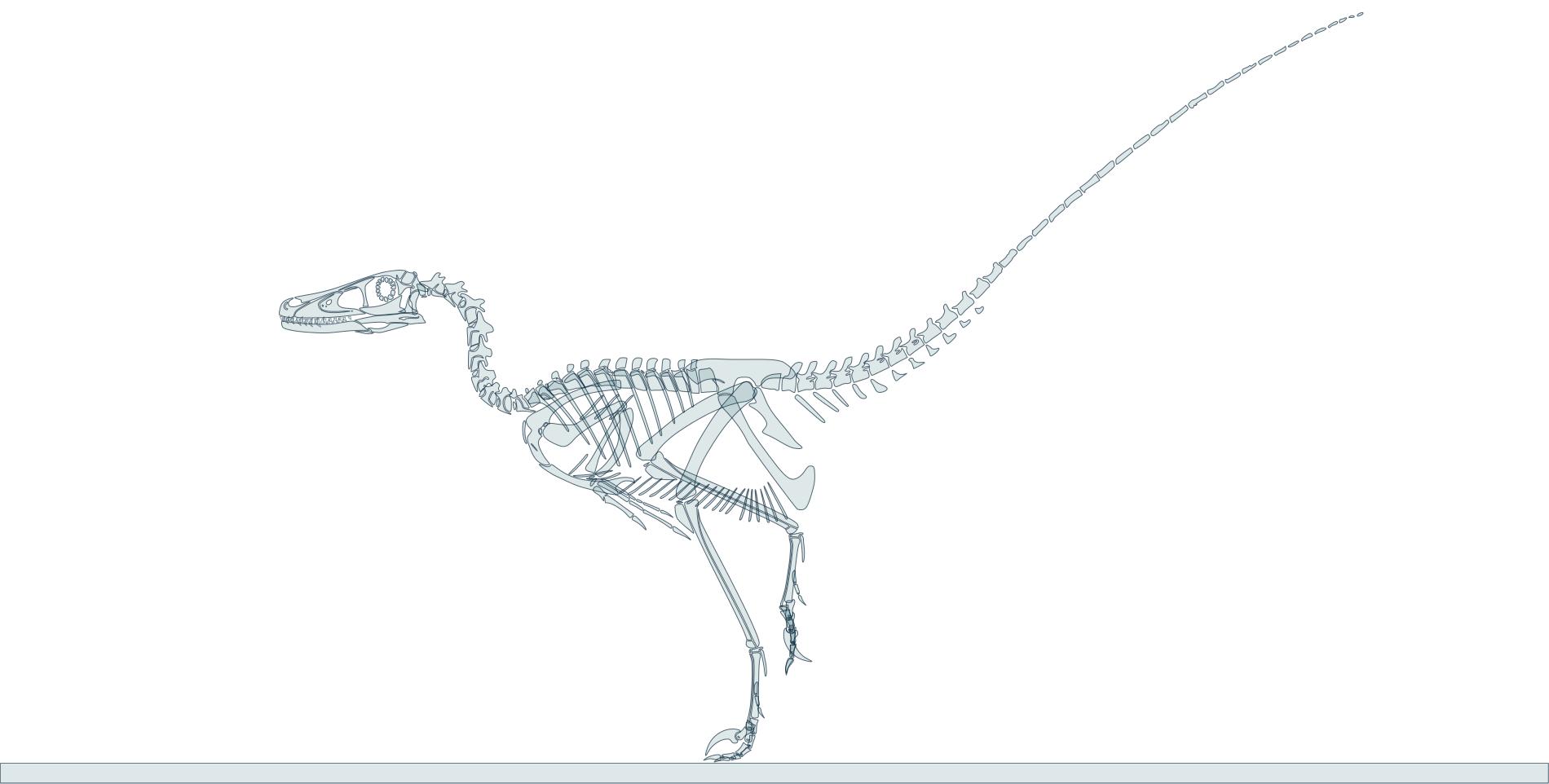 Velociraptor skeleton by oghaki - 194.3KB