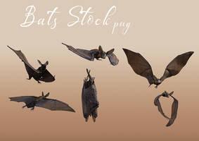 Bats Stock