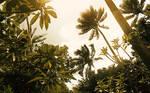 Fijian Afternoon