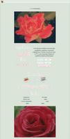 NON-CORE 'custom' box: Roses
