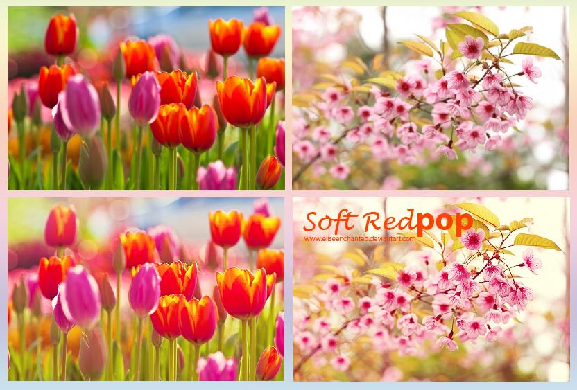 Soft Red POP