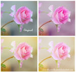 Soft roses action