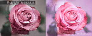 Soft rose lightroom preset
