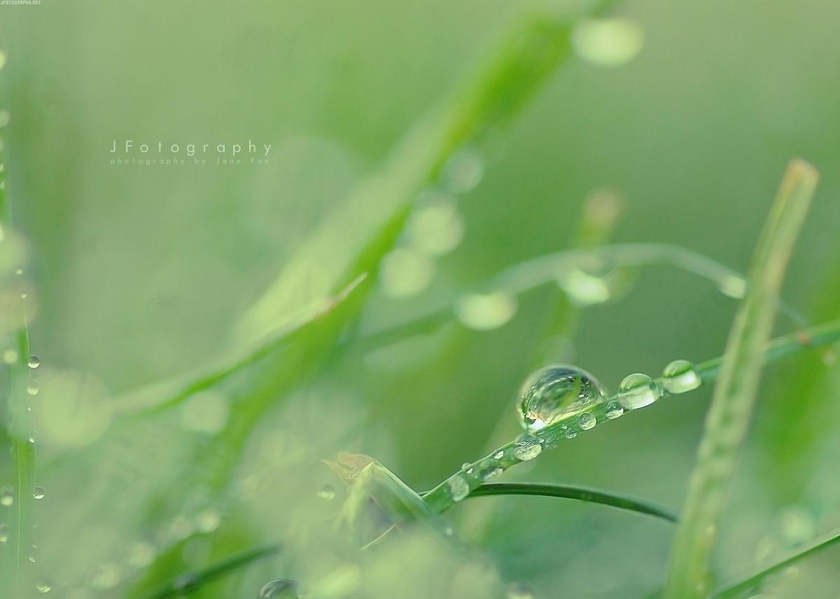 Dewdrops Wallpaper by JeanFan