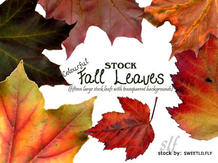 STOCK Colourful Fall Leaves by sweetlilfly