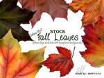 STOCK Colourful Fall Leaves
