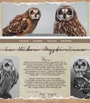 Profile Owl