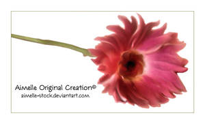 tub_flower crea_psd_ gerbera by Aimelle-Stock