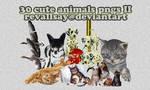 30 cute animals pngs II