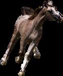 Precut Rose Grey Arabian #1