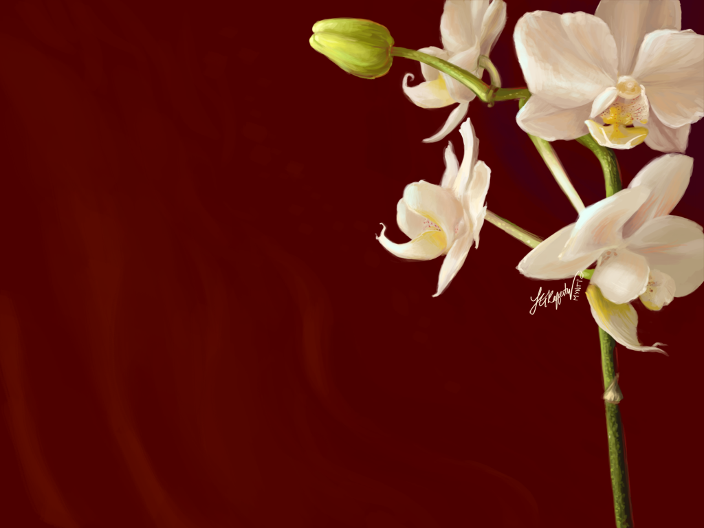 orchids wallpapers best - photo #43