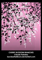 cherry blossom branches by isuckbuthellirock