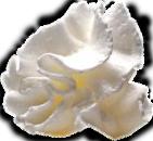 Whip Cream Dollop PS Brush by MorgaineA