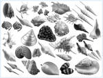 30+ Conch and Shell Photoshop Brushes