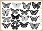 17 Beautiful Butterfly Brushes for Photoshop