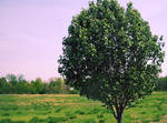 Photo Edit - Tree