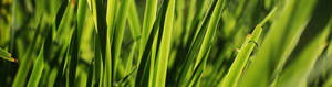 Sharp Green