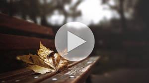 Gif - Autumn leaf by turst67